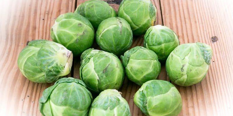 Le brocolis légume